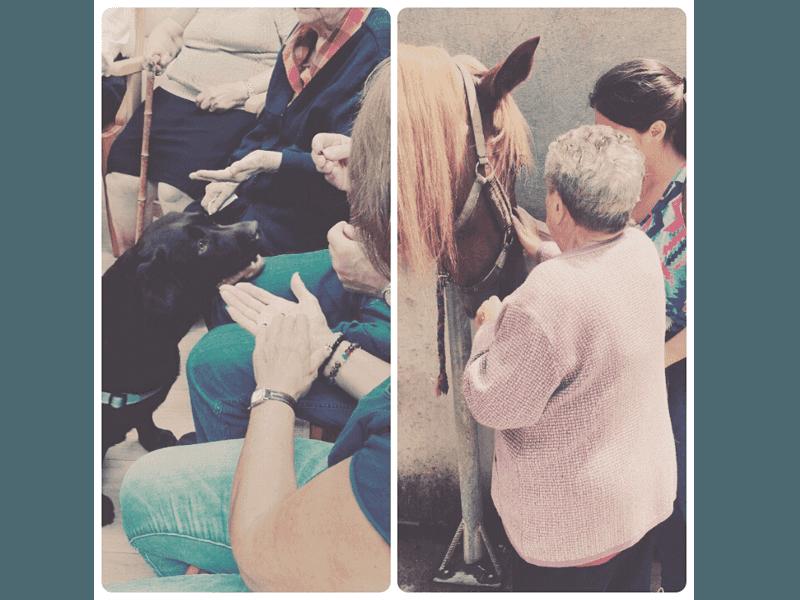 Gent Gran: Teràpia assistida amb animals