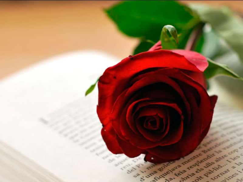 Rosa i llibre, una tradició