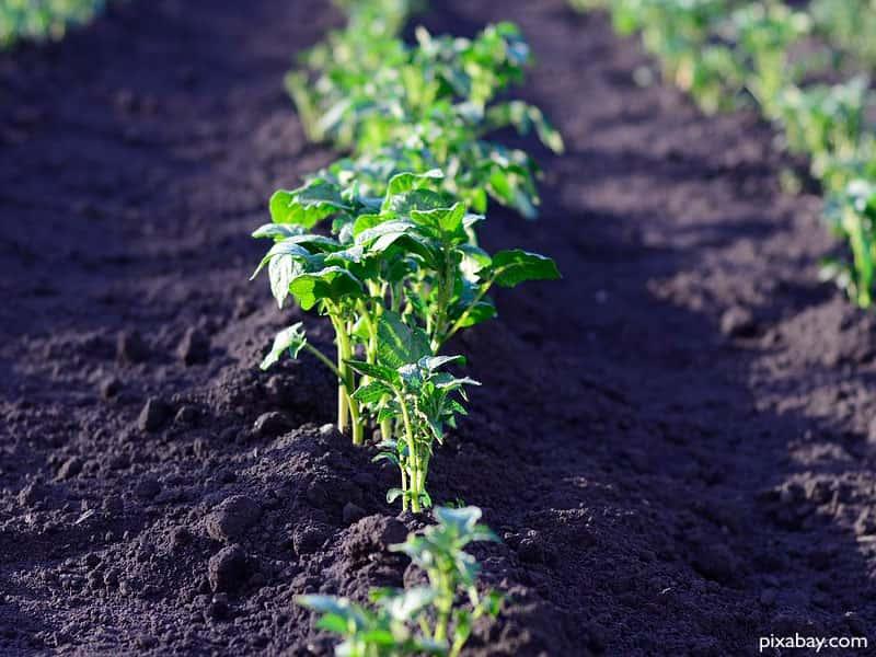 Xerrada: Fes el teu hort ecològic
