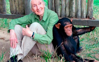 Taller: Jane Goodall, una història inspiradora