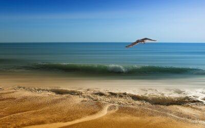 """Salut Natural: """"Els beneficis de l'aigua de mar i els minerals"""""""